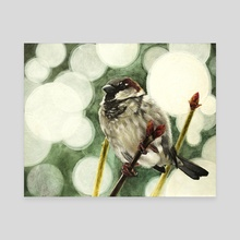 House Sparrow - Canvas by Tom Schmitt