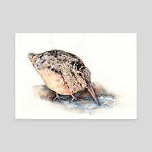 Woodcock - Canvas by Yuko Yoshikawa