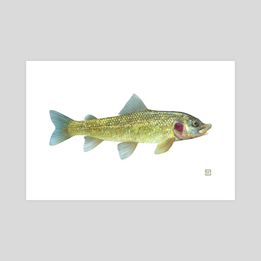 Whitefish by Eric VanAllen