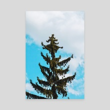 From the Tree Tops - Canvas by Katherine Young