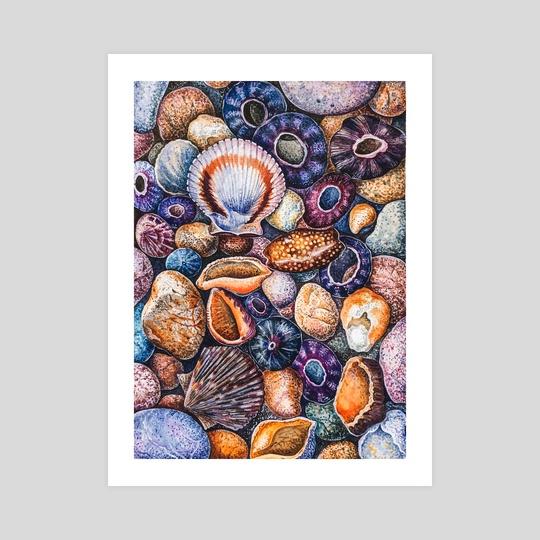 Seashells by Olga Katkova