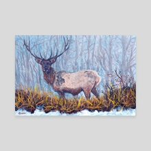 Elk Snow - Canvas by Mark Green