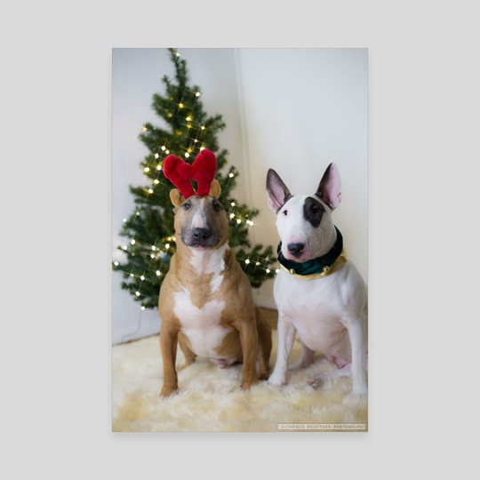 Christmas BullTerriers by Kimberly AF