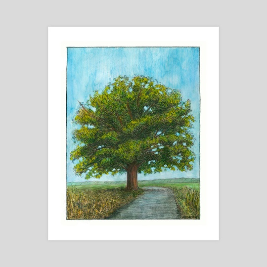McBaine Bur Oak  by Cody Davis
