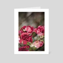 Garden roses - Art Card by Chiara Cattaruzzi