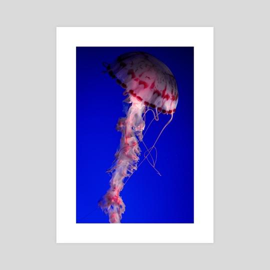 Jellyfish by Mark Mis