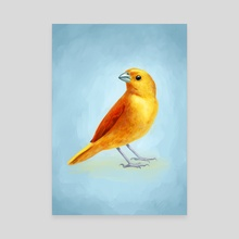 Wild Canary - Canvas by Indré Bankauskaité