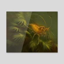 Yellow Bee Shrimp - Acrylic by Mari-Liis Kirsimägi
