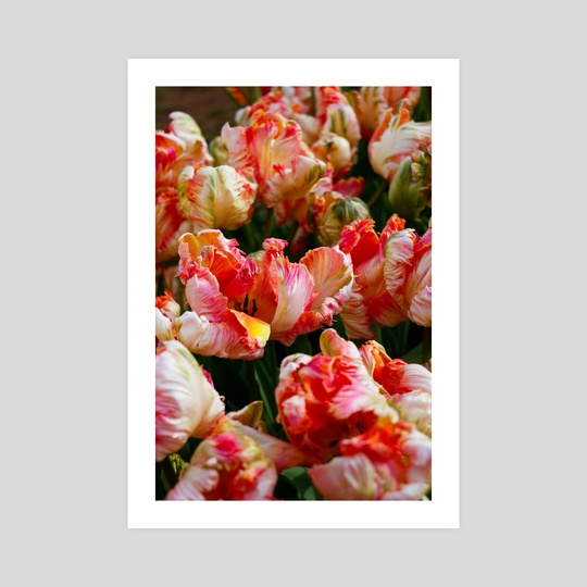 Tulips 6 by Michelle Coffeen