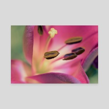 Vibrant Flower - Canvas by Eye Spy Nature