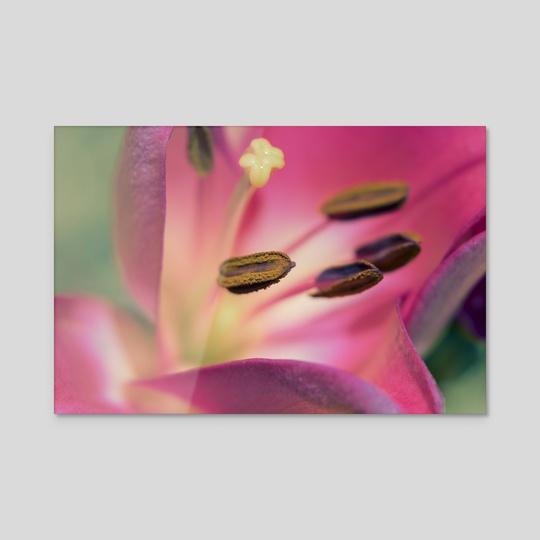 Vibrant Flower by Eye Spy Nature