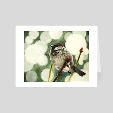 House Sparrow - Art Card by Tom Schmitt