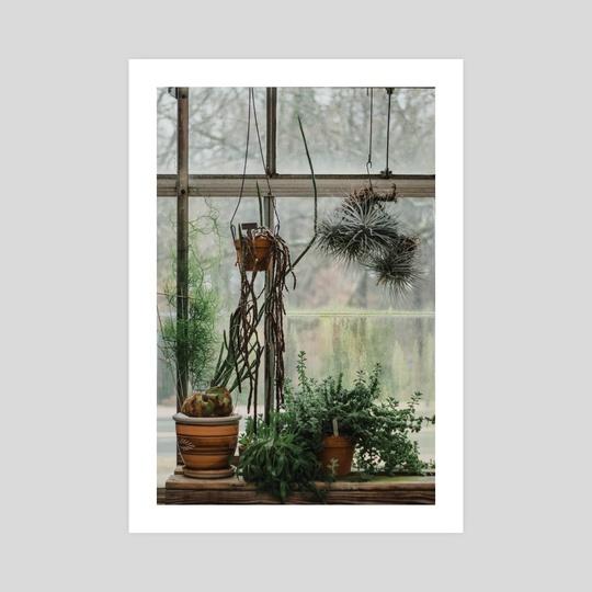 Plant Life by Sarah Kitzmann