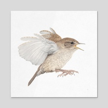House Wren - Acrylic by Veronica Park