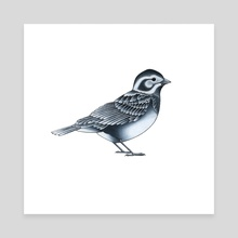 Sparrow - Canvas by Adam Lindsay Honsinger