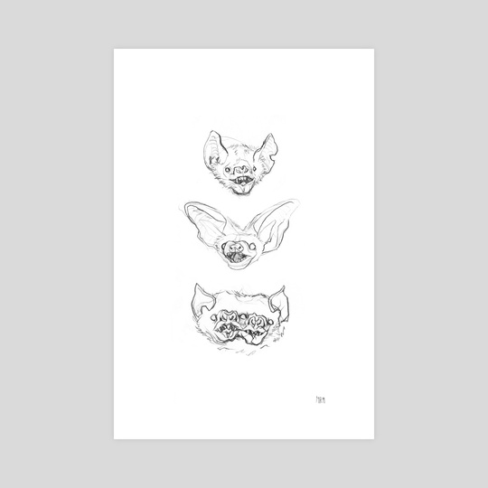 Bats by Margarida Ramos Matias