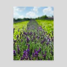 Lavender  - Canvas by Keanu Cheez
