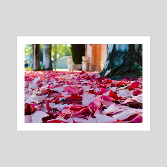 Fallen Leaves - Photography Fine Art Print for Sale by Buuck Photography